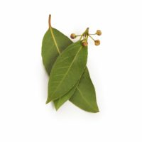 Bay Leaves Seedlingcommerce © 2018 8219.jpg