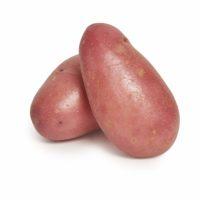 Desiree Potato Seedlingcommerce © 2018 7858.jpg