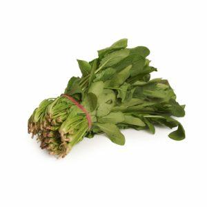English Spinach Seedlingcommerce © 2018 8083.jpg