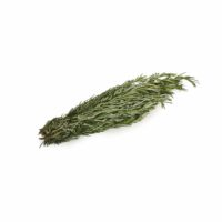 Rosemary Seedlingcommerce © 2018 8225.jpg